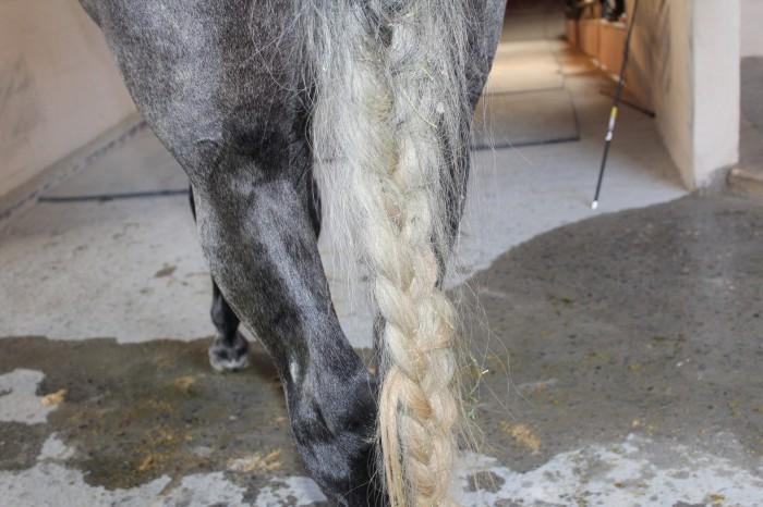 cola_de_caballo
