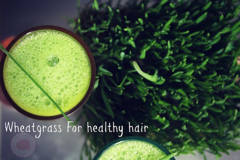 Wheatgrass for hair growth |Pasto de trigo para el cabello saludable