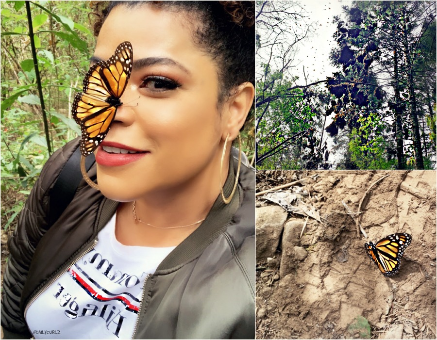 Travel with me to see the Monarch Butterfly migration-TIPS